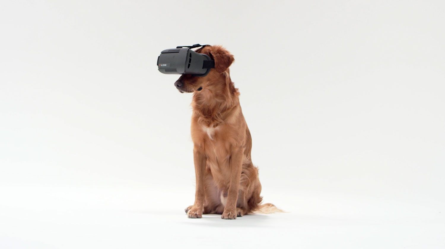 Applied Art 'Embarks' On New Venture: VR for Dogs